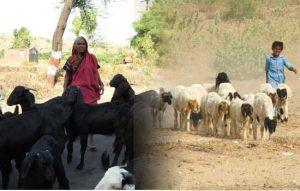 Animal Husbandry of Himachal Pradesh